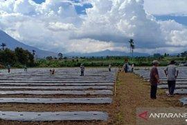 Diitengah harga tidak stabil, Mahasiswa Polbangtan Medan bantu petani Karo tanam cabai
