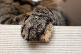 Bantu selamatkan warga, kucing di Jepang diberi penghargaan