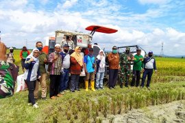 Sinergi penyuluh dan petani Tanjabbar jaga ketahanan pangan