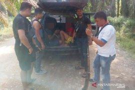 Kakak beradik pelaku pencuri ternak ditangkap saat ambil BLT