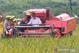 Bupati panen raya padi sawah Desa Sungai Pasir