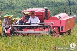 Kotabaru regent harvest rice in Sungai Pasir Village