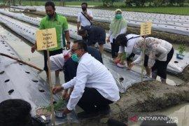 Mahasiswa Polbangtan Medan dampingi pengujian bibit cabai Jusiber bersama kelompok tani Deli Serdang