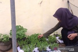 "Mahasiswa Polbangtan Medan manfaatkan ""styrofoam"" makanan sebagai media tanam sayuran"