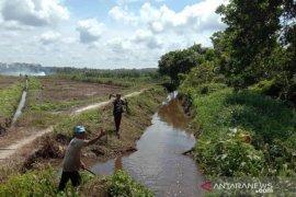 Mahasiswa Polbangtan Medan gotongroyong bersihkan lahan sawah petani Balunijuk terkena banjir