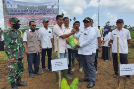 Pemerintah salurkan 1.500 kg benih jagung untuk petani Aceh Utara