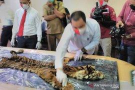 BKSDA gandeng kepolisian selidiki kematian harimau di Aceh Selatan