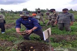 Panen perdana kentang di tengah pandemi COVID-19, Bupati Nikson apresiasi Martohap Aritonang