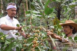 Warga Wanagiri-Buleleng kelola hutan desa untuk tanaman kopi