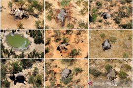 Kematian misterius 275 gajah di Botswana diselidiki