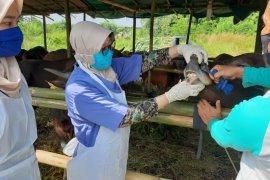 Cegah COVID-19 Dispertan Kota Serang cek protokol kesehatan penjual hewan qurban