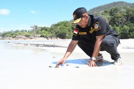 Bupati Citra lepas tukik di pesisir pantai pulau Karimata