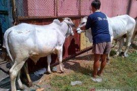 Pemkot Singkawang sosialisasi penyembelihan hewan kurban melalui medsos