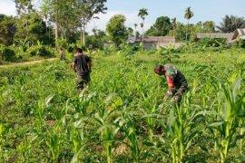 Koramil di Aceh Timur dan masyarakat sulap lahan kosong jadi produktif, begini caranya