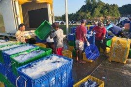 Harga ikan merosot, nelayan calang kirim ikan ke Sibolga