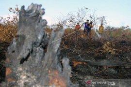 Kebakaran lahan gambut  10,5 hektare di Aceh Barat belum bisa dipadamkan