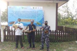"""KKP lepasliarkan dua """"fosil hidup"""" di perairan Sumatera Utara"""