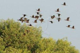 Ekowisata Untuk Konservasi Burung Air Page 1 Small
