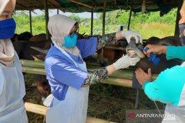 Cegah Covid, Dinas Pertanian Kota Serang cek protokol kesehatan penjual hewan qurban