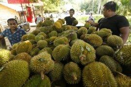 Pedagang Pengumpul Durian Lokal  Page 2 Small