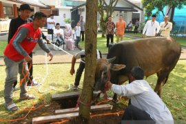 Dispangtan Kota Bandung sediakan tempat khusus penjualan hewan kurban