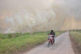 Perusahaan sawit DSI jadi tersangka Karhutla di Riau