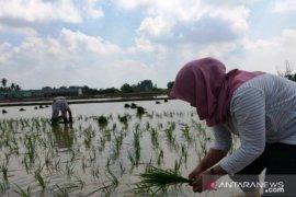 Mahasiswa Polbangtan Medan mengaku senang bisa membantu petani dimasa COVID-19