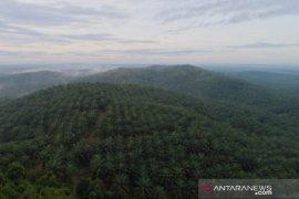 PT Subur Agro Makmur gunakan teknologi drone, antisipasi karhutla di masa pandemi