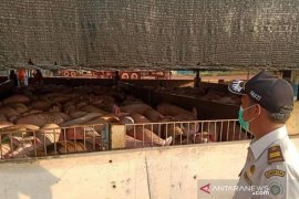 Terkait flu babi, Kementan sudah mitigasi risiko lalu lintas hewan sejak Maret 2020