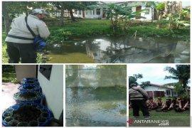 Jaga ketahanan pangan, lahan sekitar sanggar Pramuka Polbangtan Medan pun dimanfaatkan