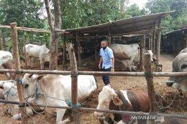 Pandemi COVID-19 tak berdampak pada penurunan permintaan sapi di Bantul