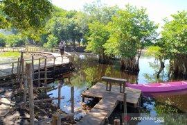 Pengelola wisata mangrove Bengkulu terapkan normal baru