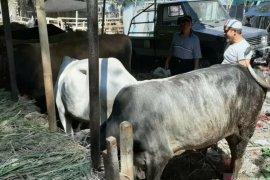 Wali Kota Bogor setujui surat edaran mengenai pemotongan hewan kurban