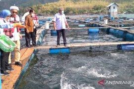 Menteri Edhy jelaskan alasan pencabutan regulasi larangan ekspor benih lobster