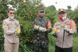 Polres Simalungun pesta Panen Raya Nusantara TNI-Polri di Cingkes