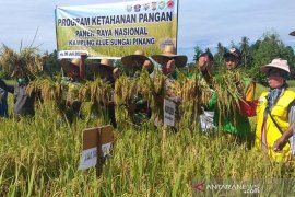 Begini strategi bupati Akmal wujudkan produksi padi melimpah dimasa pandemi COVID-19