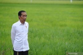 Presiden: Lumbung pangan di Kalteng seluas 30.000 hektare