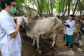 Gugus Tugas COVID-19 siapkan aturan pemotongan hewan kurban