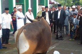 Pemprov Malut sediakan 50  hewan kurban jelang Idul Adha 1441 Hijriah