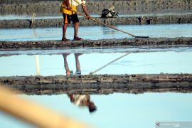 Presiden Jokowi : Masalah garam rakyat tidak pernah dicari jalan keluar