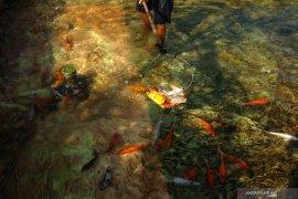 Budidaya Ikan Koi Page 2 Small