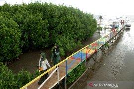 Ekowisata Mangrove Lantebung mulai dibuka Page 2 Small