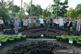 Bangka Belitung bangun kebun sayur organik percontohan