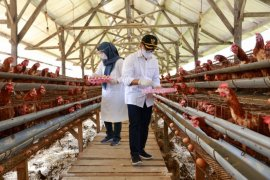 Banyuwangi berdayakan pelaku ekonomi lokal pengadaaan nutrisi tenaga kesehatan