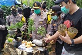 Polisi bongkar satu hektare ladang tempat penanaman ganja di Bandung