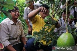 Pemkab Sukabumi kerja sama pesantren kembangkan agribisnis