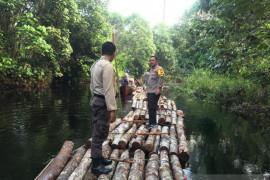 Polres Siak amankan kayu hasil pembalakan liar dekat Danau Zamrud