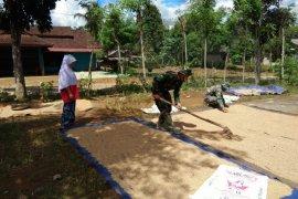 Anggota Satgas TMMD ke-108 membantu warga menjemur Padi