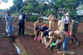 Ketersediaan benih hal utama pengembangan sentra bawang merah Sukabumi