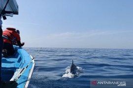 W Sumatra's Pieh Island declared sea mammal conservation area